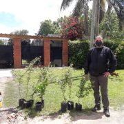 Más de cien árboles entregados por la Municipalidad de Merlo, criados en el Vivero Municipal